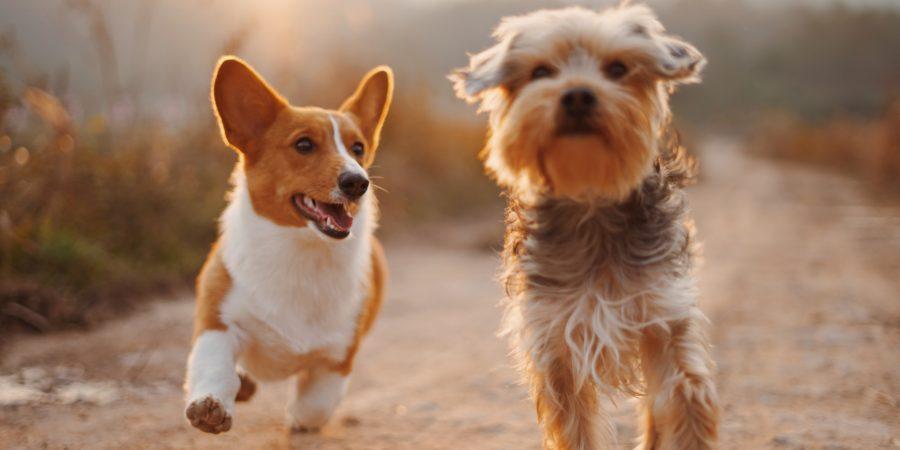 dog friendly victorian village